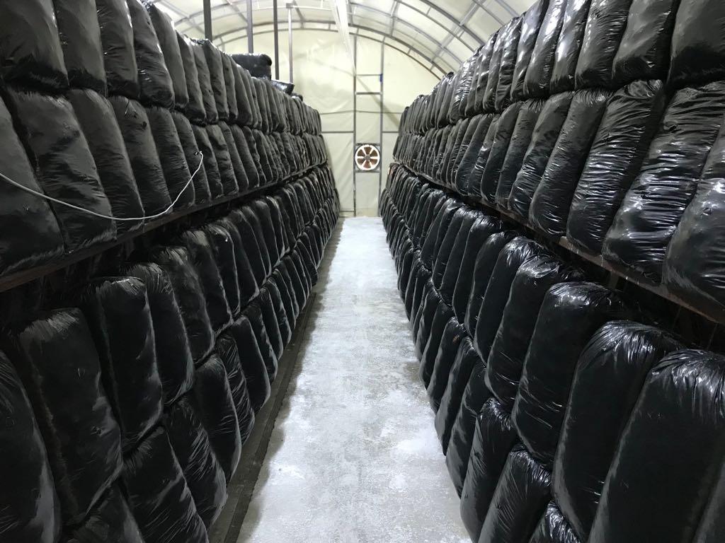 mantar üretimi